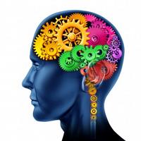 One Brain 6. stupeň – STRUKTURÁLNÍ NEUROLOGIE/ STRUCTURAL NEUROLOGY